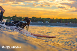 Orange Surfer