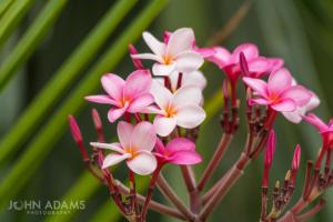 PR Flowers