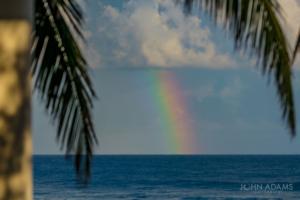 PR Rainbow Palms