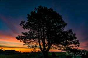 Pine Tree Sunrise