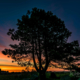Pine Tree Sunrise