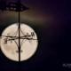Summer Full Moon Vane