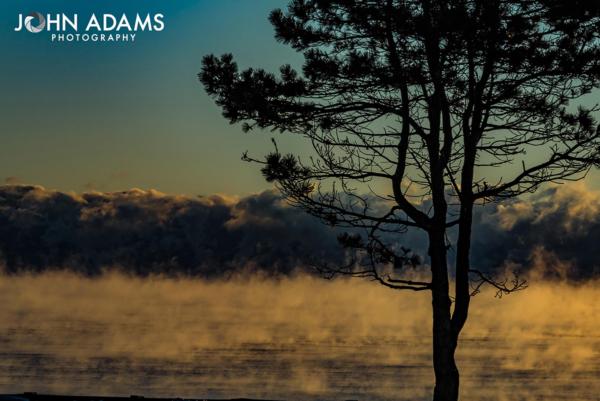 tree-smoke
